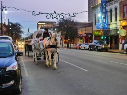 Beautiful horse, downtown Austin, TX.