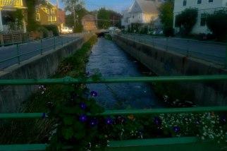 Morning Glories and Cascadilla Creek