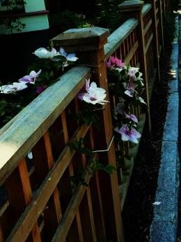 Flowers on Fence