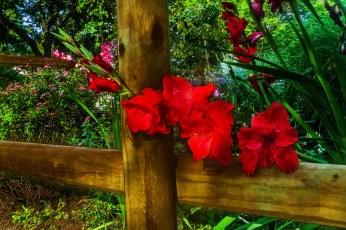 My next door neighbor's flowers.